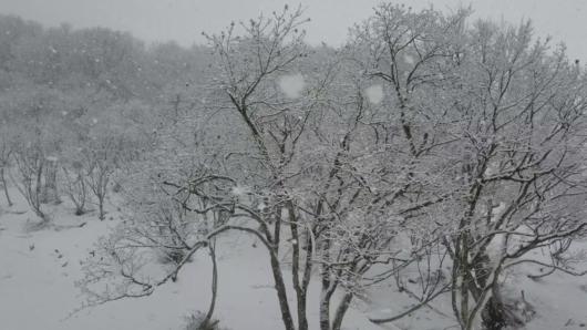 いかにも新潟らしい、特大粒の雪が降ってくる一幕も。